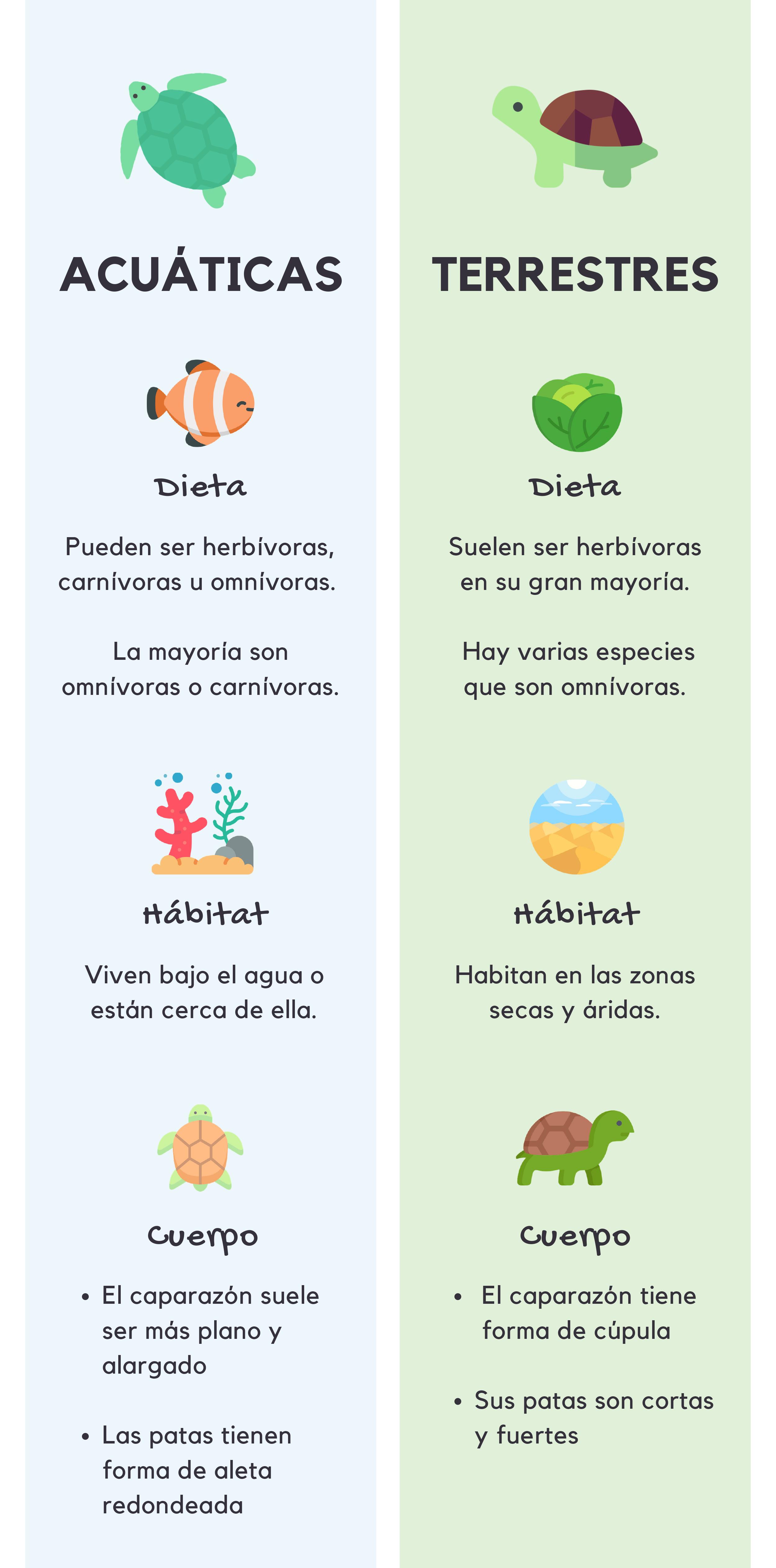 diferencias-entre-tortugas-de-agua-y-tortugas-de-tierra