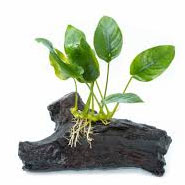 plantas-para-tortugas
