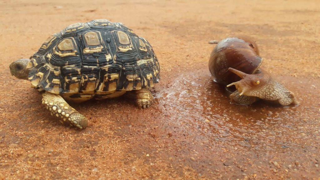 como-se-desplazan-las-tortugas