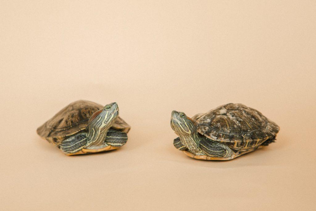 diferencias-tortugas-agua-tierra