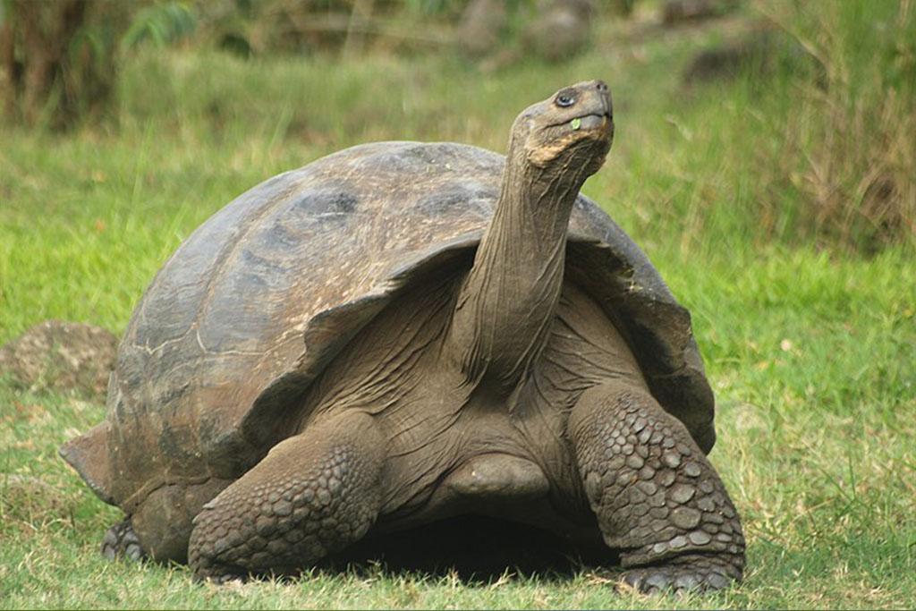 diferencias-tortugas-terrestres-galapago