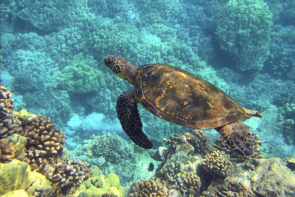 especies-tortugas-peligro-extincion