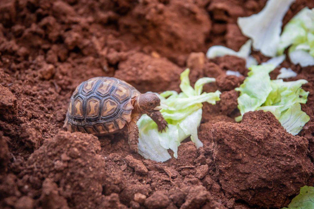 hibernacion-tortugas-agua-tierra