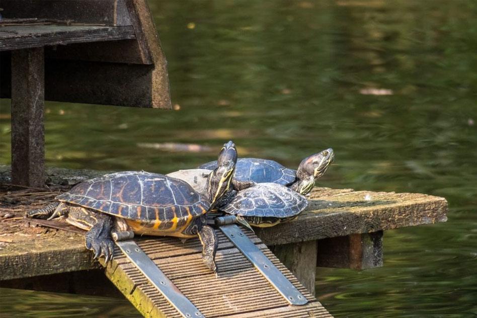 isla-tortugas-casera
