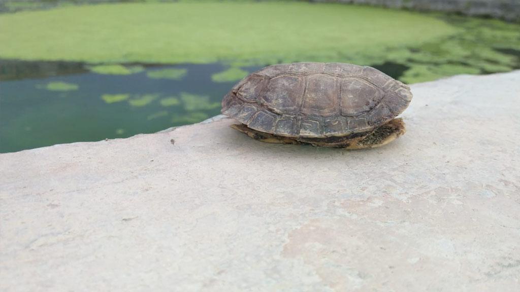 las-tortugas-duermen-como-donde-cuanto-tiempo