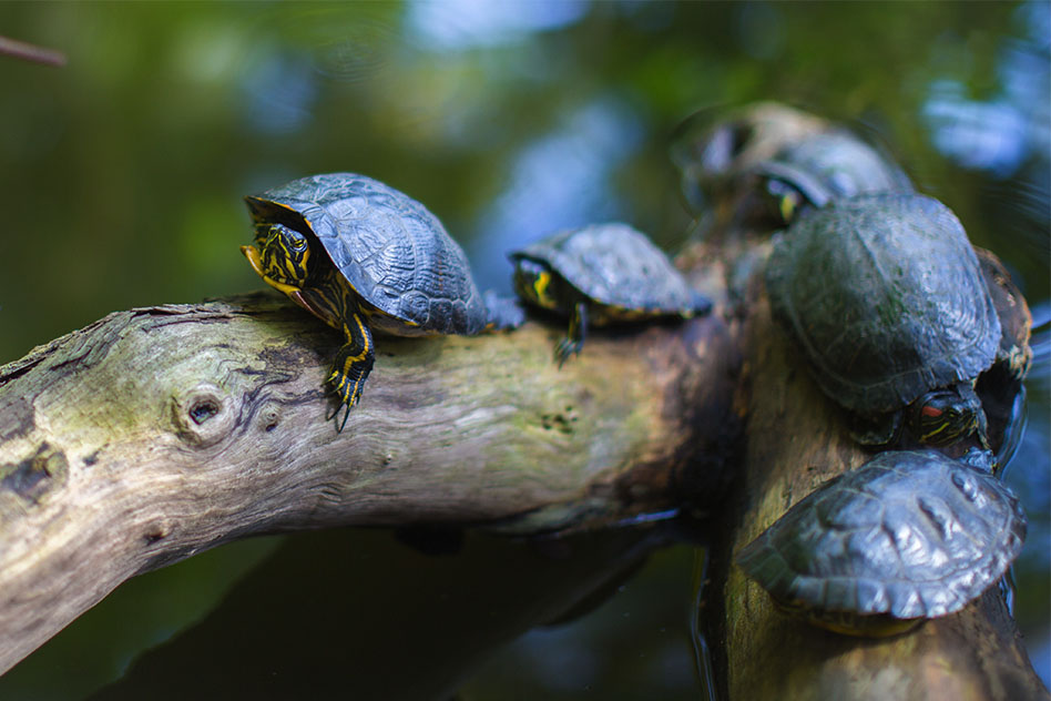 las-tortugas-necesitan-calcio