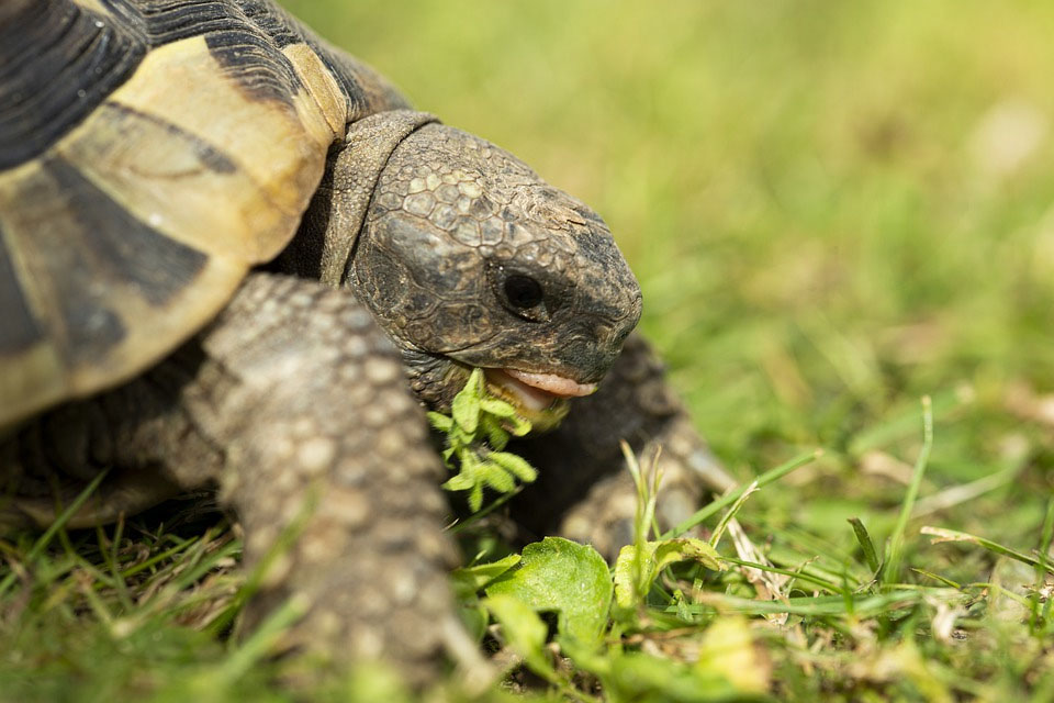 las-tortugas-necesitan-vitaminas