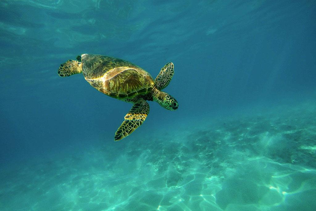 las-tortugas-se-pueden-ahogar