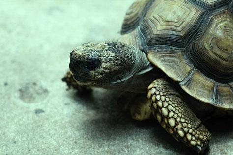 las-tortugas-tienen-frio
