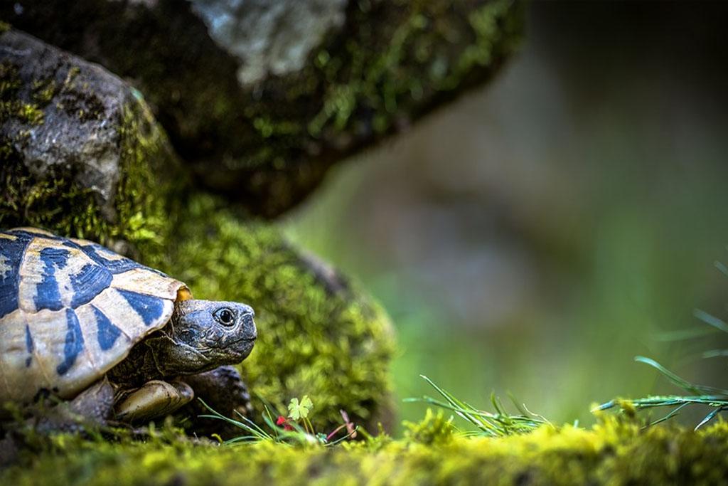 las-tortugas-tienen-sentimientos