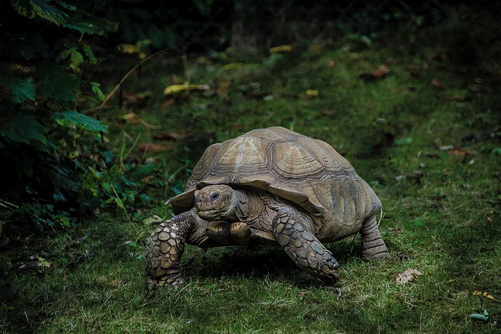 por-que-las-tortugas-son-lentas