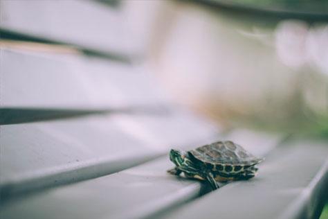 por-que-mi-tortuga-no-crece