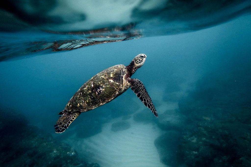 por-que-migran-tortugas-marinas
