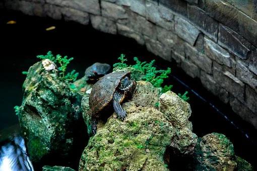 que-comen-las-tortugas
