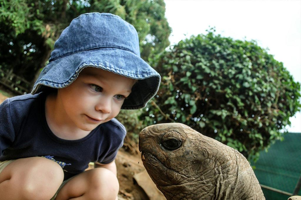 saber-sexo-tortuga-macho-hembra