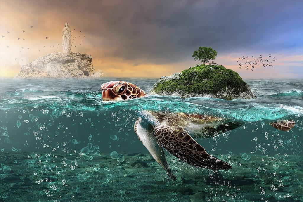 tortuga-quiso-volar-sur-pasar-invierno