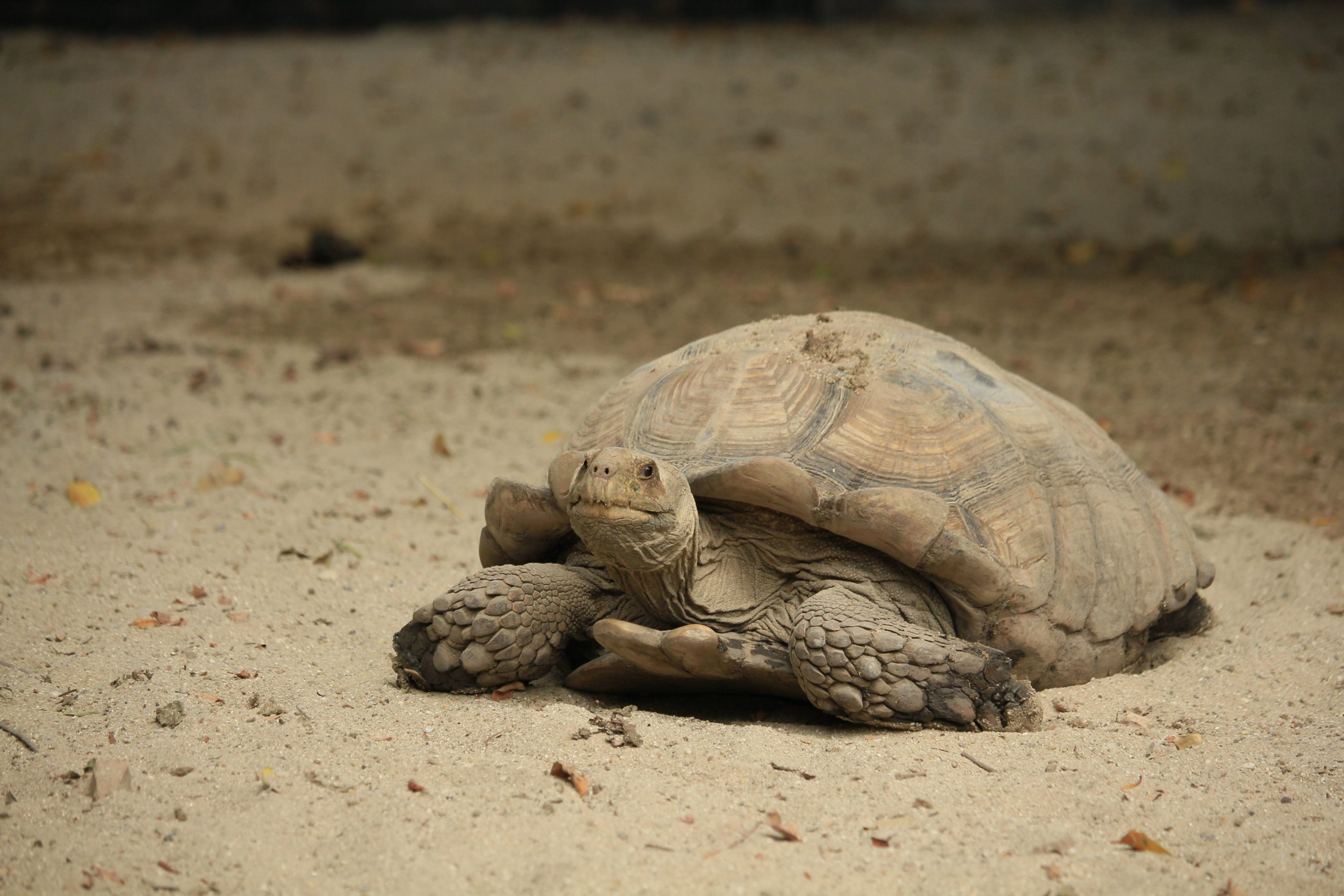 tortugas-de-tierra