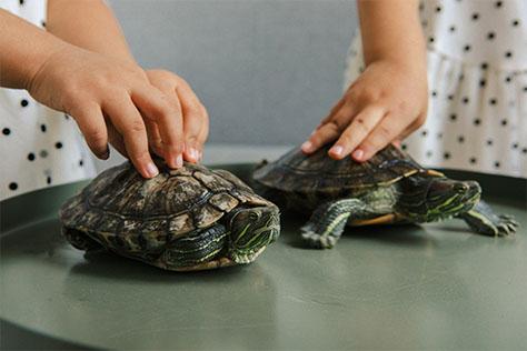 tortugas-legales-prohibidas-españa